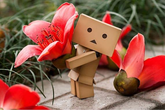 ดอกงิ้วแดง