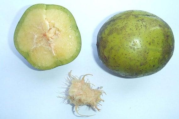 ลูกมะกอกฝรั่ง