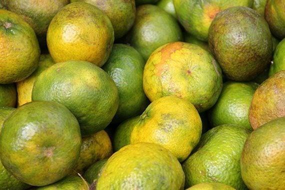 รูปส้มเขียวหวาน