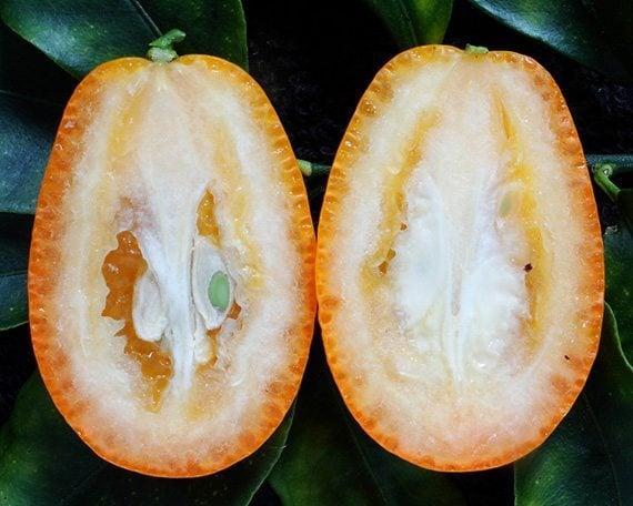 เมล็ดส้มจี๊ด