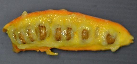 เมล็ดกล้วยหมูสัง