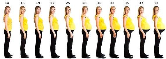 ระยะเวลาการตั้งครรภ์