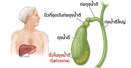 Image result for น้ำดี